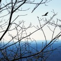 Bird flying near the Appalachian Trail