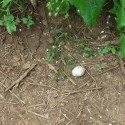 Bird egg on the trail