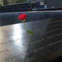 911 Memorial rose